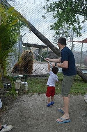 Big Cat Habitat and Gulf Coast Sanctuary : Feeding the Bear