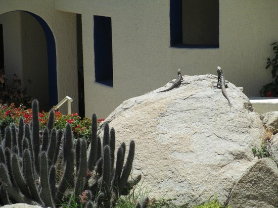Misiones del Cabo: amigos