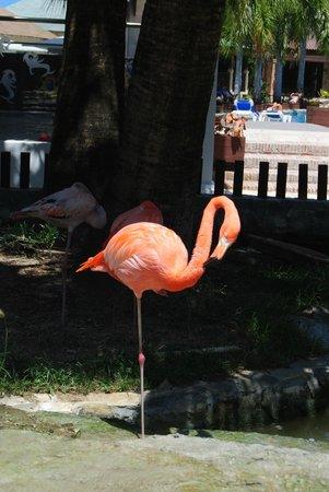 IFA Villas Bavaro Resort & Spa : flament rose de l hotel