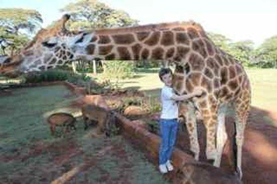 Giraffe Manor: Giraffe hug