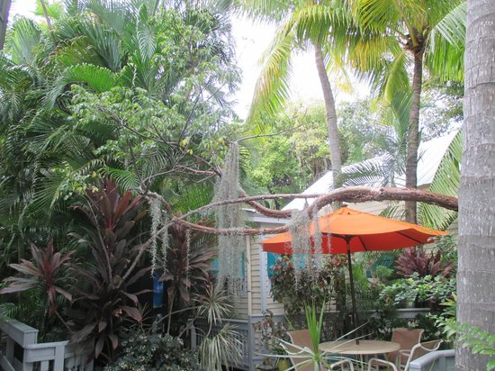 Eden House : Lush gardens around the hotel