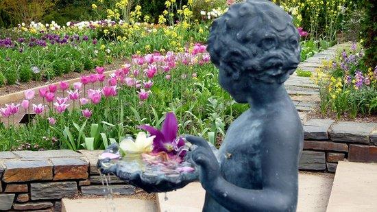 Sarah P. Duke Gardens: Duke Gardens
