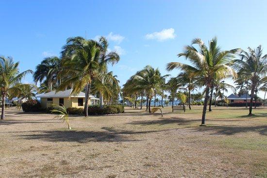 Nisbet Plantation Beach Club: Lawn view