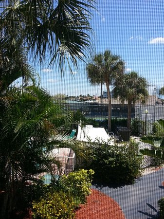 Dolphin Tiki Bar & Grill: A delicious view from my condo