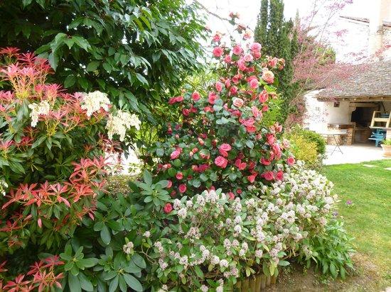 Le Reflet des Vignes : Jardin