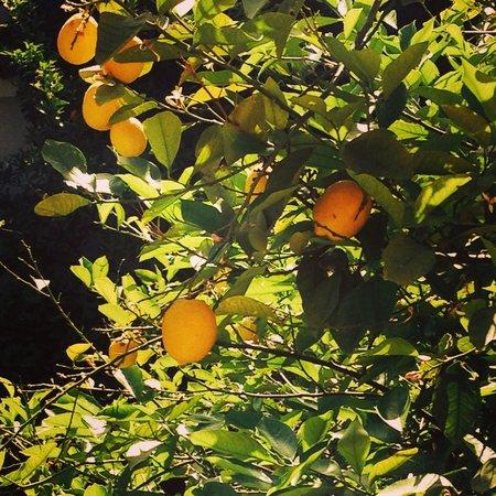 Palais Donab: Oranges for breakfast