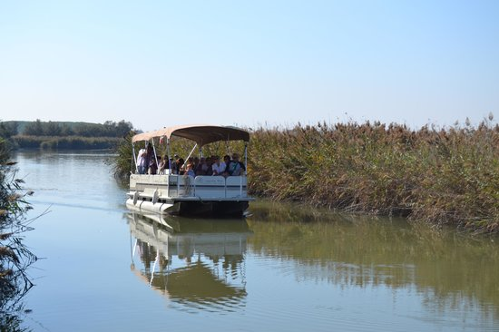 Lagunaria Boat Day Tours