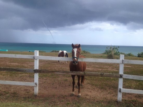 Hector's by the Sea: Water spout tornado approaching shore behind horses at Hector's