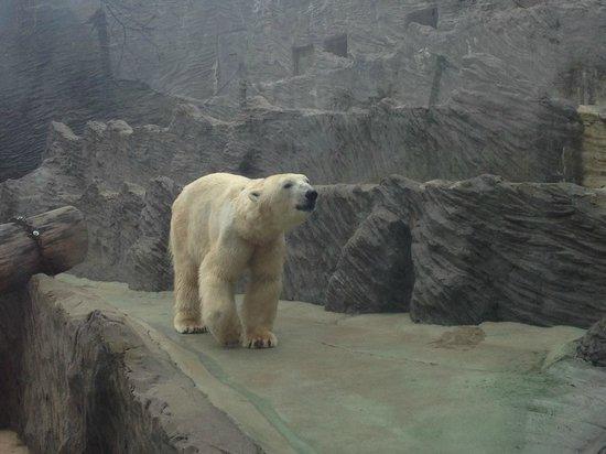 Prague Zoo : Polar bear