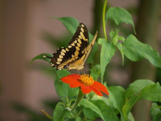 Bok Tower Gardens : Butterflies are all around.