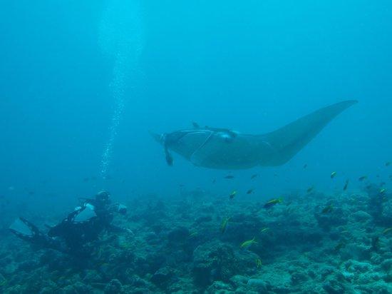 Dive The World Maldives: Me & Manta Ray at Madivaru