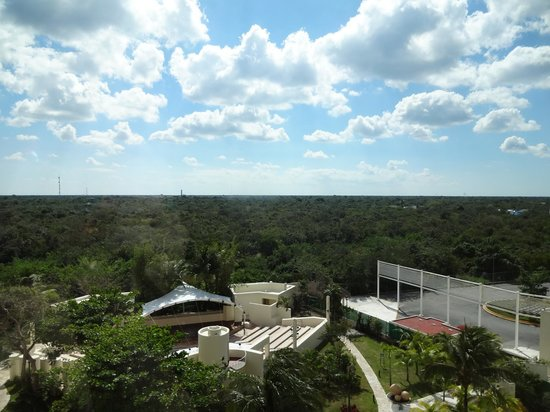 Grand Park Royal Cozumel: Forest behind the hotel