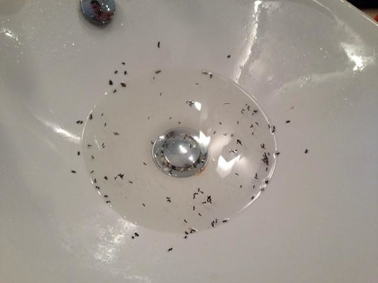 Kenzi Club Agdal Medina : ANTS in the sink