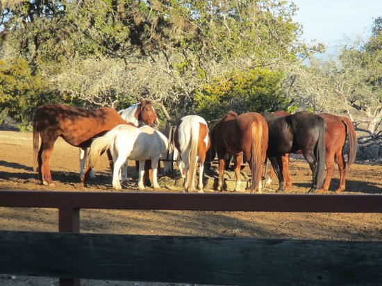 The Sugar & Spice Ranch: The horses