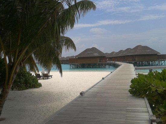 Vakarufalhi Island Resort: Maldive2014
