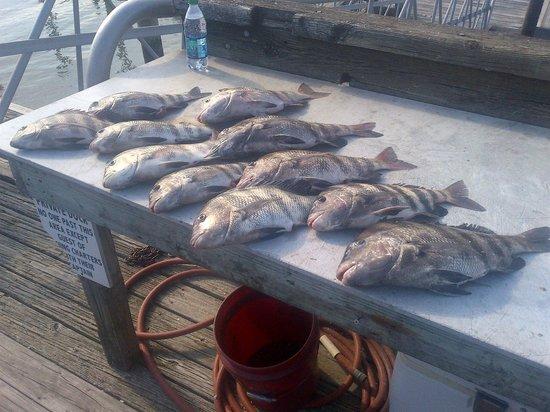 HHI Deep Sea Fishing: Nice Catch!!