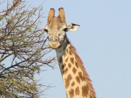 Savannah Game & River Retreat : Gotta love the incredible wildlife!!