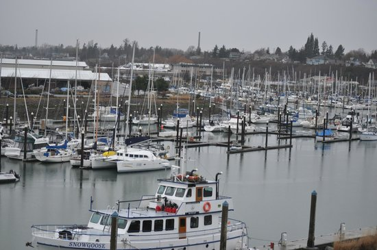 Hotel Bellwether: The marina