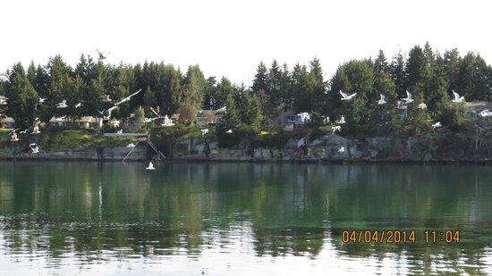 Pacific Shores Resort and Spa : Nanoose Bay