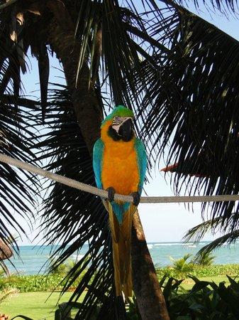 Serrambi Resort: Natureza