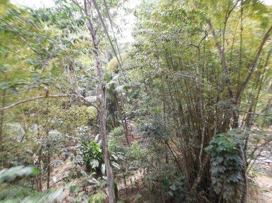 Treetop Adventure Park: ziplining
