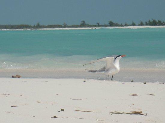 Playa Paraiso: 4