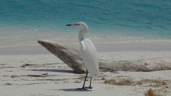 Playa Paraiso: 5