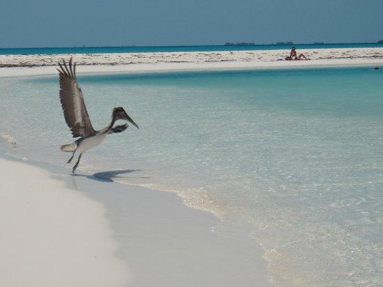 Playa Paraiso: 2