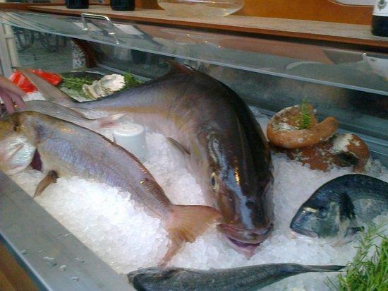 Splendido : Ljepa riba