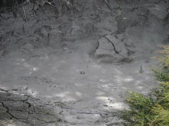 Whakarewarewa - The Living Maori Village: Bubbling mud pool