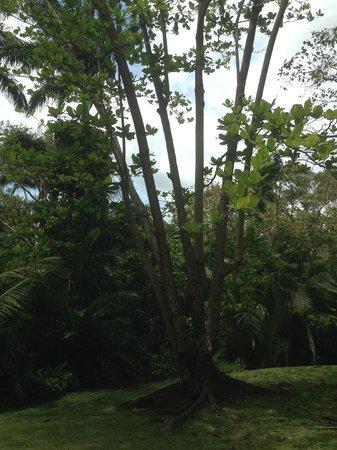Flower Forest: Trees