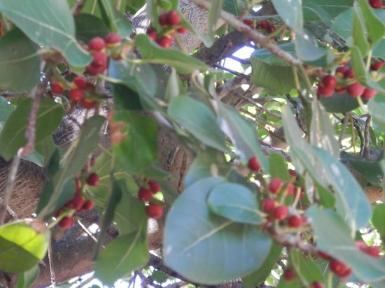 Banyan Tree Park: growing in harmony