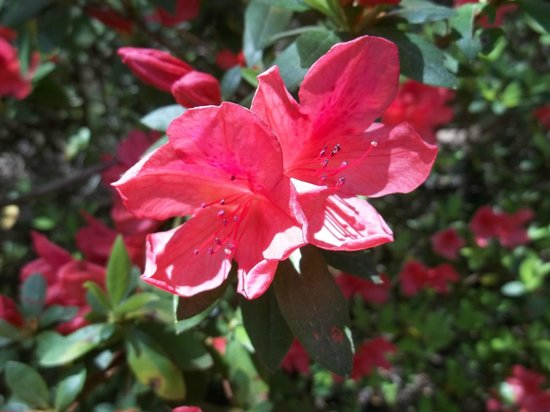 Brookgreen Gardens: 9