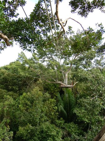 Amazonia Expeditions' Tahuayo Lodge : very fun zipline..