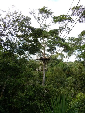 Amazonia Expeditions' Tahuayo Lodge: zipline, go for it!