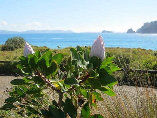 Hahei Holiday Resort : View