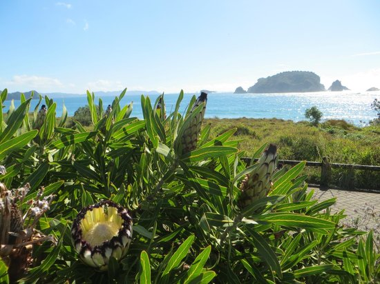Hahei Holiday Resort: View