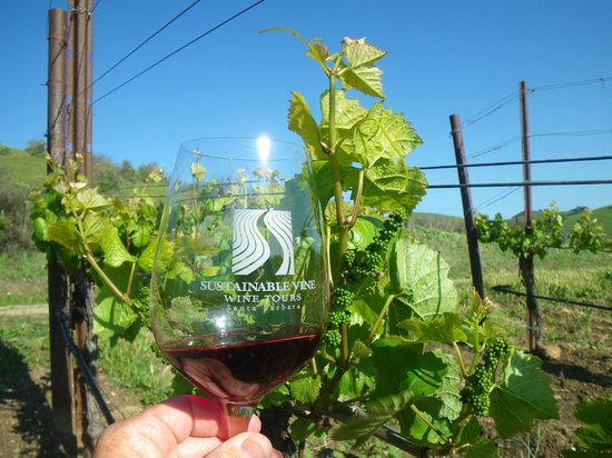 Sustainable Vine Wine Tours : Tasting in the vineyard