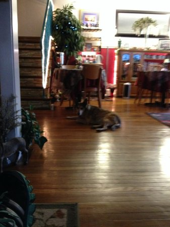 Raphael Inn: Miss Heidi the Wonder Dog