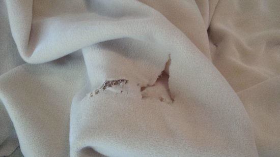Lake Buena Vista Resort Village & Spa : lençóis rasgados