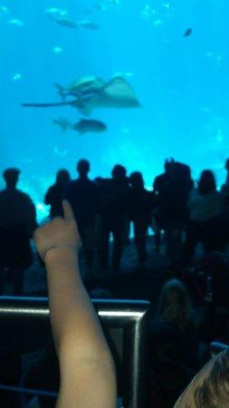 Georgia Aquarium Visit 2014