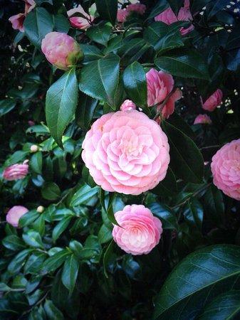Shinjuku Gyoen National Garden : Near the entrance