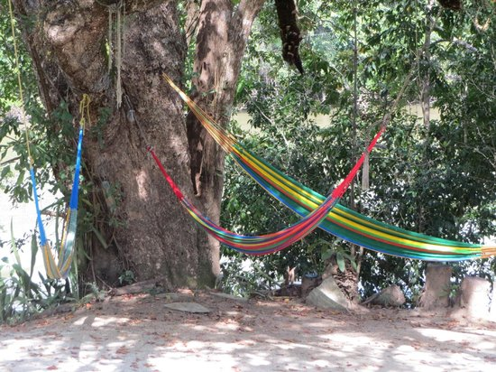 Black Orchid Resort : Hammocks