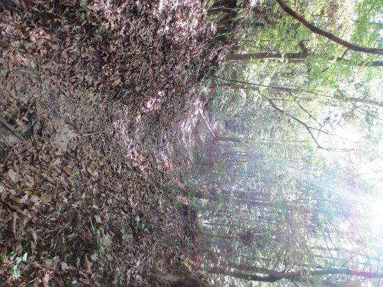 Village Point Park Preserve: Walking along the trail