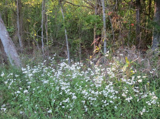 Village Point Park Preserve: Wildflowers along the trail