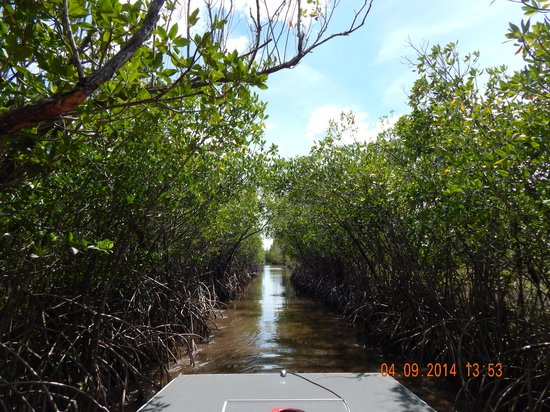 Jungle Erv's Everglades Airboat Tours: Mangroves