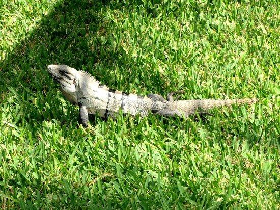 Iberostar Cancun: In the gardens