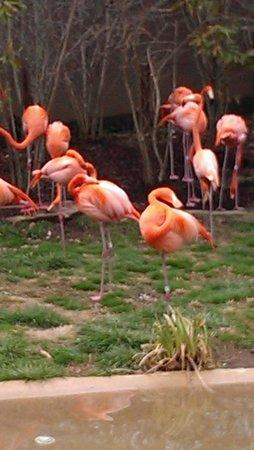Nashville Zoo: flamingos!