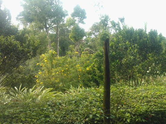 Kalarickal Heritage Bungalow: View from the estate