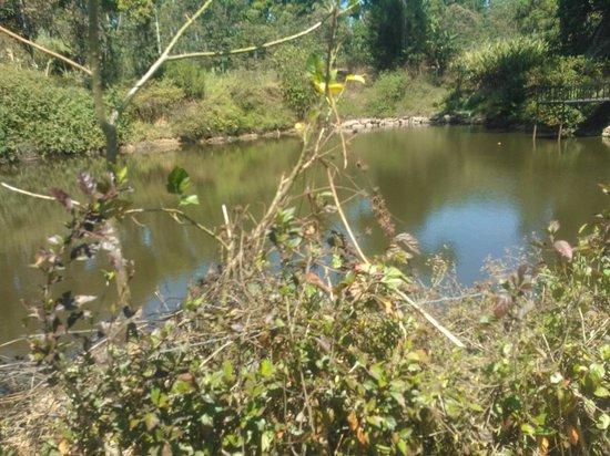 Kalarickal Heritage Bungalow: Lake in the property